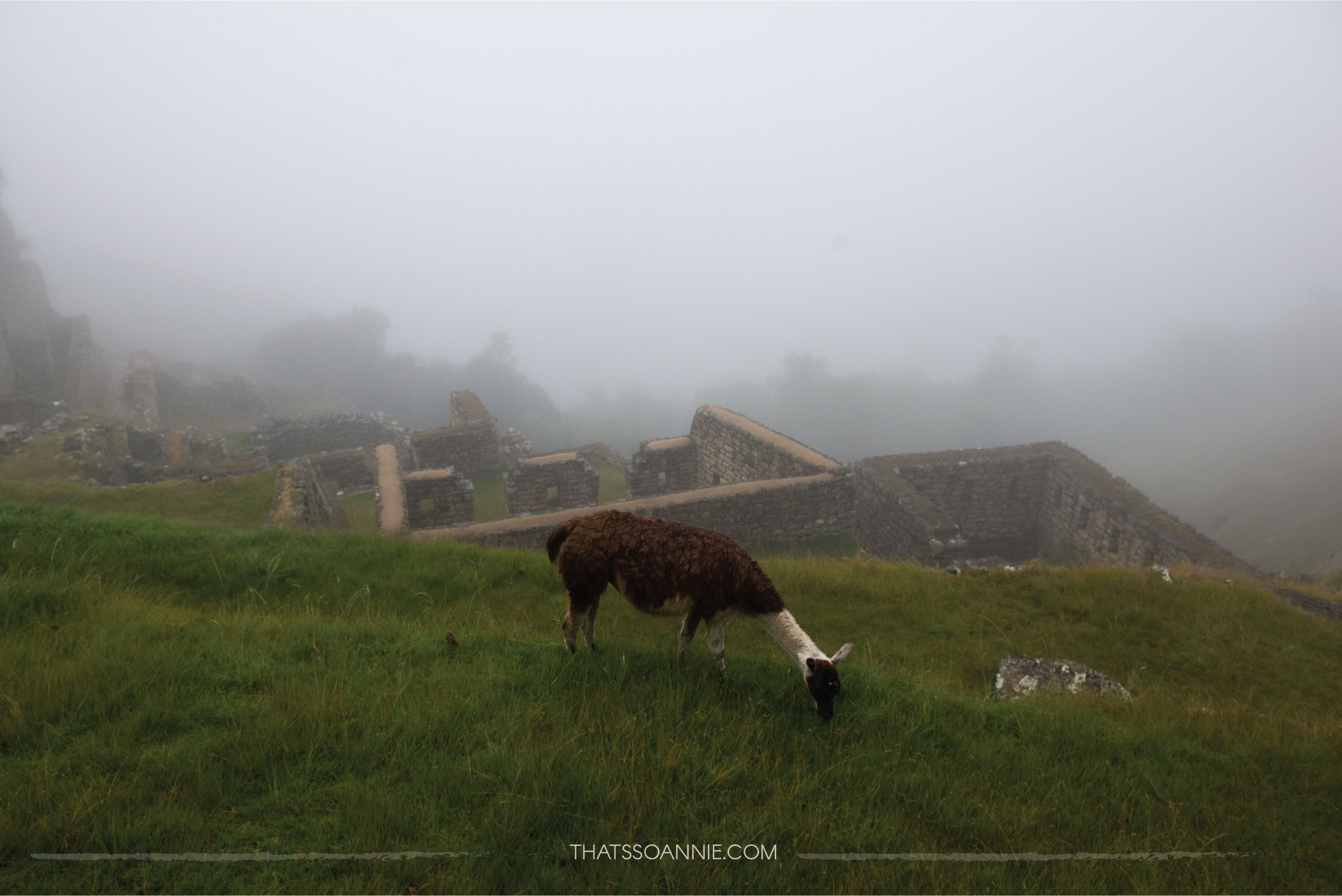 Foggy morning at Machu Picchu