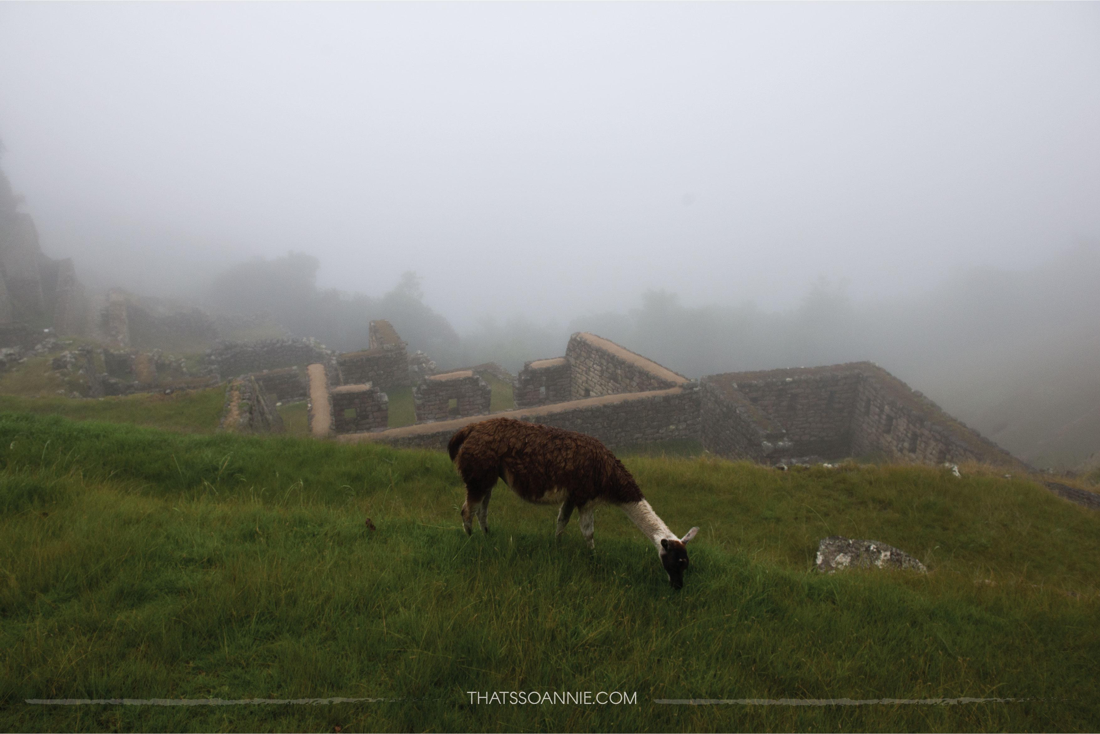 Foggy morning at Machu Picchu